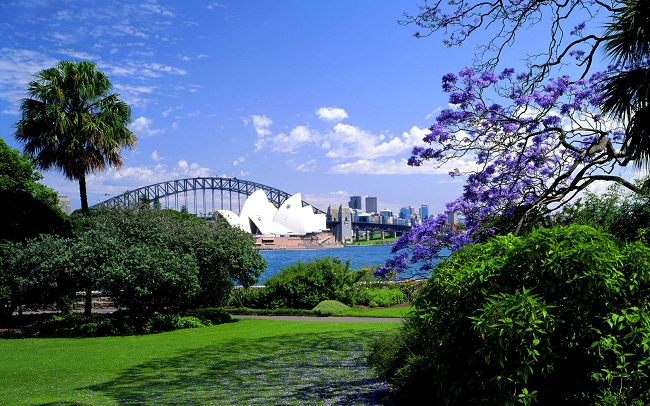 ve may bay di sydney gia re nhat